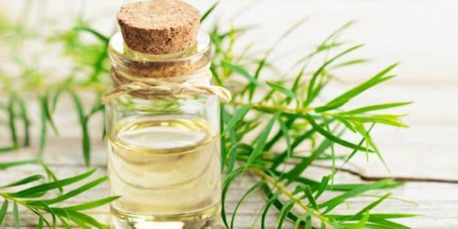 Incredibili benefici dell'olio di melaleuca per pelle e capelli